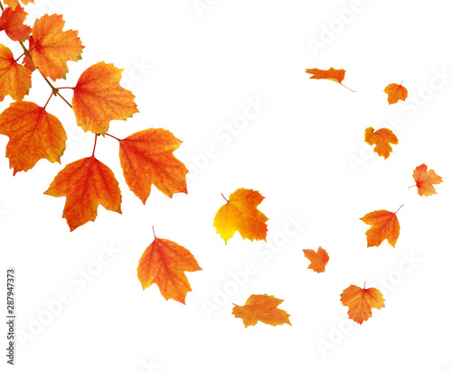 La pose en embrasure Fleur autumn leaves