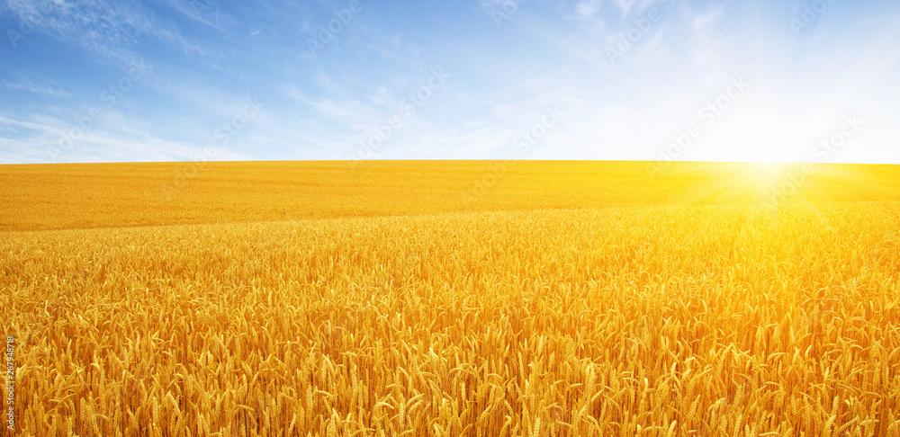 Fototapety, obrazy: Wheat field and sun