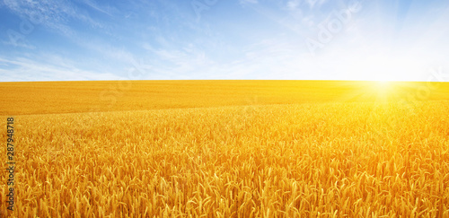 Canvas Prints Culture Wheat field and sun