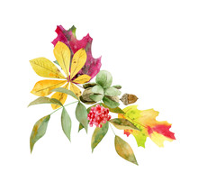Watercolor Fall Arrangement Of Foliage And Fruit