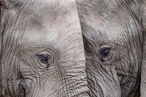 Photo  elephant eye close up in kruger park south africa