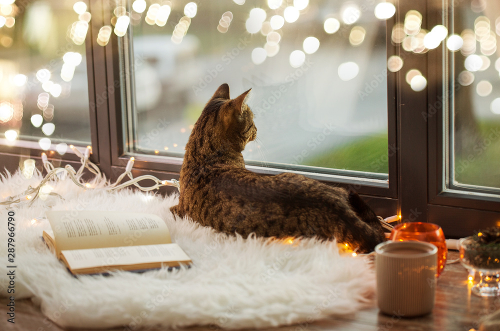 Fototapety, obrazy: pets, christmas and hygge concept - tabby cat lying on window sill with book and garland lights at home