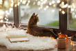 canvas print picture - pets, christmas and hygge concept - tabby cat lying on window sill with book and garland lights at home