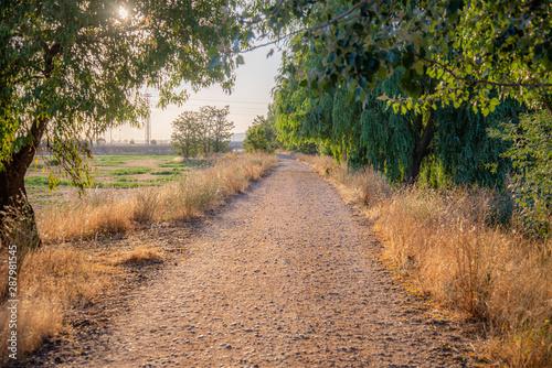 campo en verano con árboles y flores brotando Canvas Print
