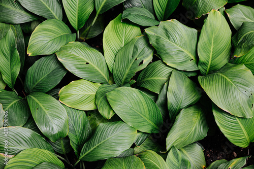 Deurstickers Planten tropical leaf texture green leaves Background, foliage nature