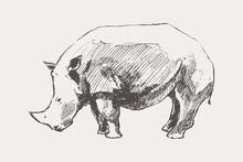 Rhinoceros Hand Drawn Vector Illustration A Sketch