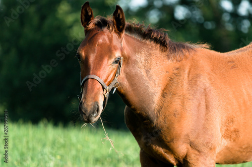 Young colt horse looking into camera