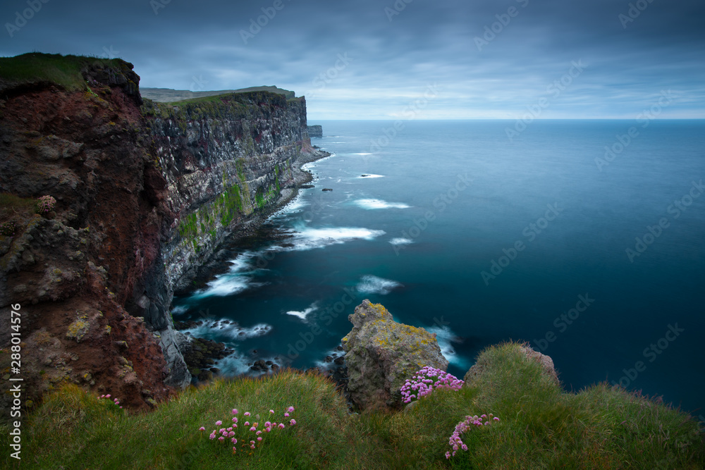 Fototapety, obrazy: Beautiful pink flowers on the slopes of the cliffs Latiabiarg. West Iceland