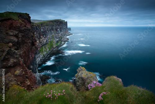 fototapeta na drzwi i meble Beautiful pink flowers on the slopes of the cliffs Latiabiarg. West Iceland
