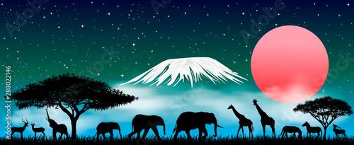 Fotografía African animals at night