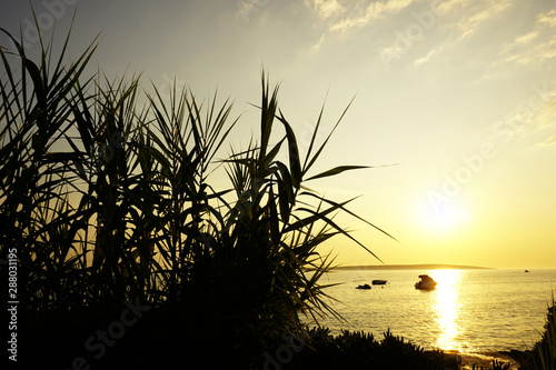 Fotografia  Bamboo branches with leaves silhouette in front of golden sea sundown in the bea