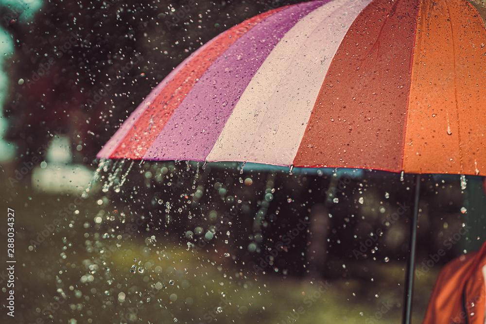Fototapeta Bright colored rainbow umbrella in the rain autumn weather