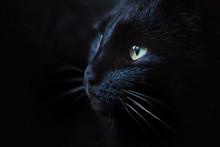 Close Up Portrait Of A Beautif...