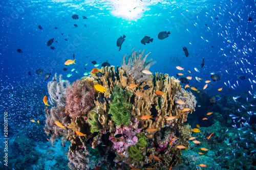 Photo sur Toile Recifs coralliens Tropical fish on a colorful, healthy tropical coral reef