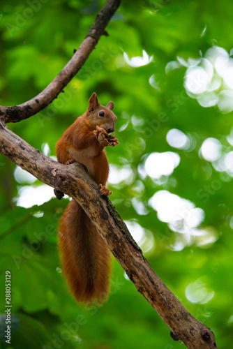 Fotobehang Eekhoorn Squirrel on autumn tree nature animal wild life survive