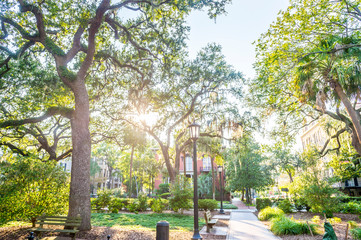 Bright scenic view of tropical sun streaming through Spanish moss hanging from oak trees in a green square in Savannah, Georgia, USA