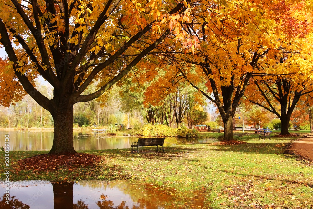 Fototapeta Beautiful colorful autumn nature background. Beautiful autumn landscape with colorful trees around the pond and bench in a city park. Lakeview park, Middleton, Madison area, WI, USA.