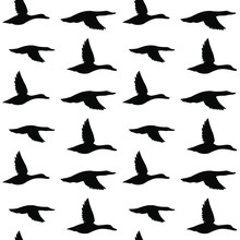 Vector Seamless Pattern Of Black Flying Duck Silhouette Isolated On White Background