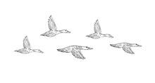 Vector Hand Drawn Sketch Flock...