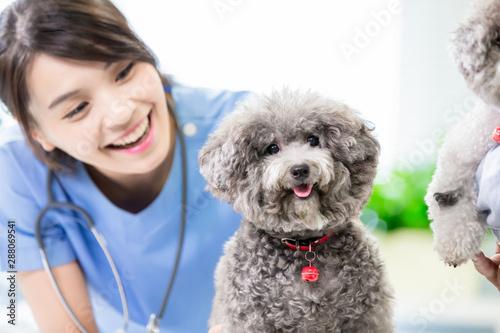 mata magnetyczna pet dog and the vet