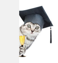 Surprised Cat With Black Graduation Cap Behind Empty White Board Holding Glass Of Champagne. Isolated On White Background