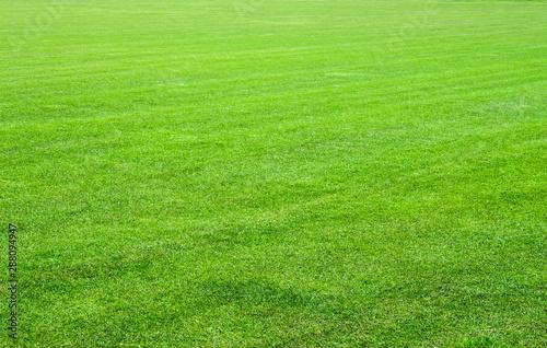 Foto auf Leinwand Lime grun The grass of the stadium