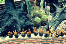 Closeup Of Cactus Plants And T...