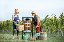 Senior Man And Young Woman As Winemakers Squeezing Grapes With Press Machine On The Vineyard, Getting Fresh Juice For Wine Production