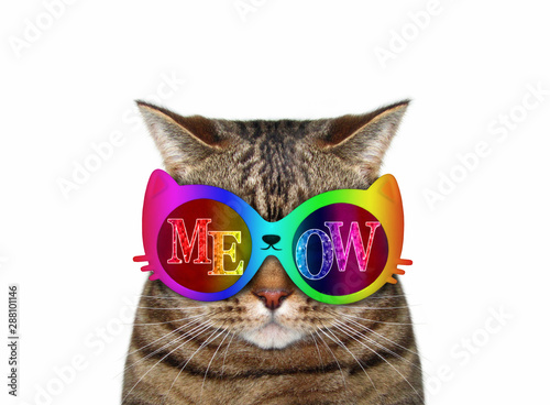 Fotografia The cat wears color sunglasses with the inscription  meow