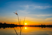 Dragonfly At The Lake On Sunset