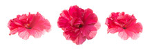 Set Of Several Hibiscus Flower...