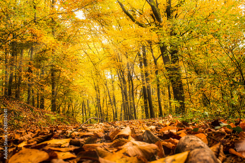 Fotobehang Meloen Autumn forest with colorful foliage
