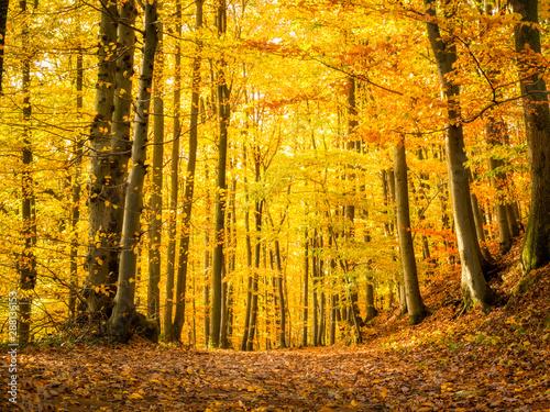 Fotobehang Meloen Golden October in the autumn forest