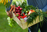 Fototapeta Fototapety do kuchni - Strong farmer man in blue clothes is holding in his hands wooden case with ripe autumn vegetables. Carrot with tops, pink radish, red pepper, squash, cucumber, onion. Green background, Russia, Moscow