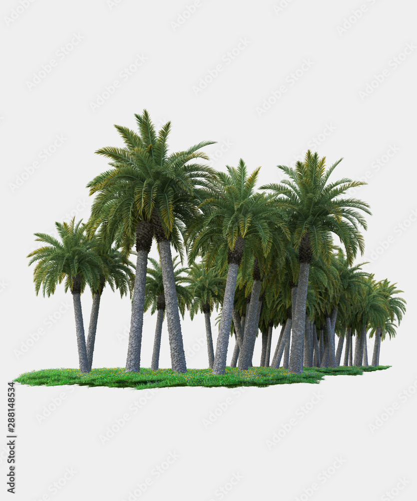 Fototapety, obrazy: Palm trees isolated. Image useful for banners, posters or photo maipulations. 3d rendering. Illustration