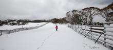 Solitary Walker On The Snow Fi...