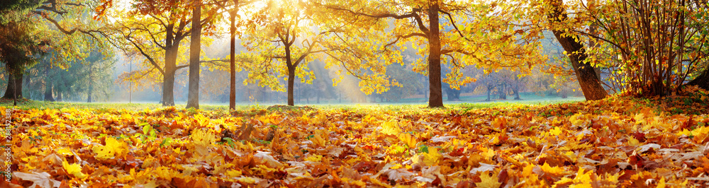 Fototapety, obrazy: trees in the park in autumn on sunny day