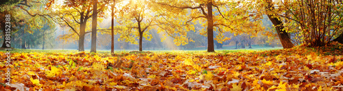 trees-in-the-park-in-autumn-on-sunny-day