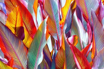 Fototapetabackground, colorful, leaves, illuminated, by, sun, large shot
