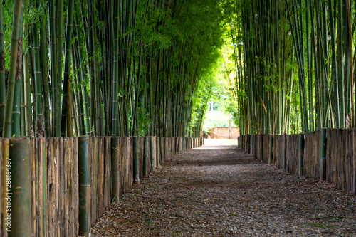 Keuken foto achterwand Bamboo Green bamboo in the forest nature background.