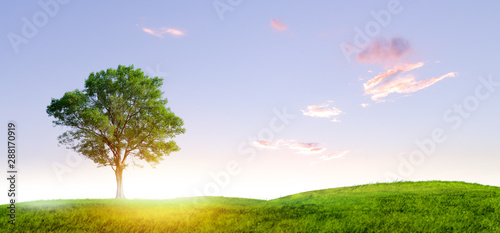 single tree on small hill and sunset with clouldy sky day Fotobehang
