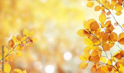 Pinturas sobre lienzo  Vibrant fall foliage