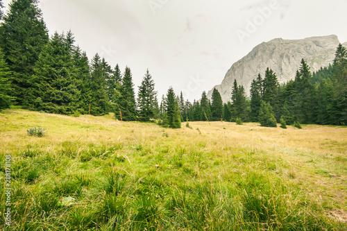 Boschi verdei delle Dolomiti Wallpaper Mural