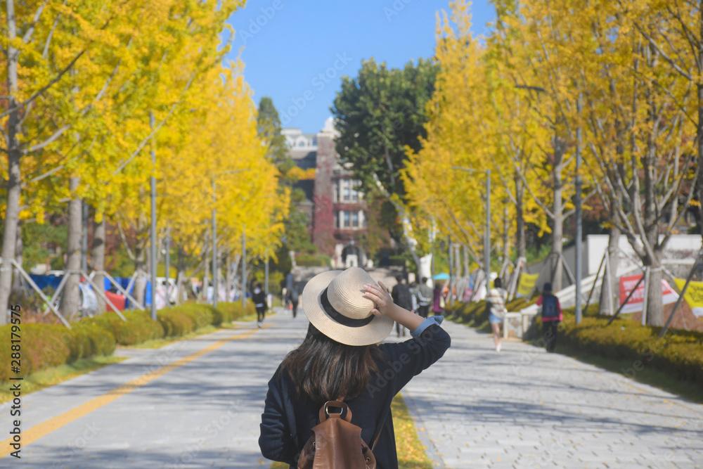 Fototapeta A woman is travel in the University in Korea during Autumn season.