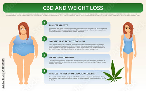 Fotomural CBD and Weight Loss horizontal textbook infographic illustration about cannabis as herbal alternative medicine and chemical therapy, healthcare and medical science vector