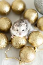 Hamster With Christmas Balls