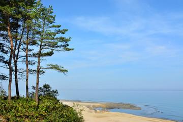 Fototapeta Do hotelu klif, plaża i drzewa, piękny krajobraz