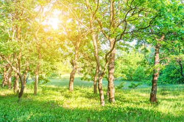 Panel Szklany Podświetlane Do pokoju Landscape with green forest and beautiful nature