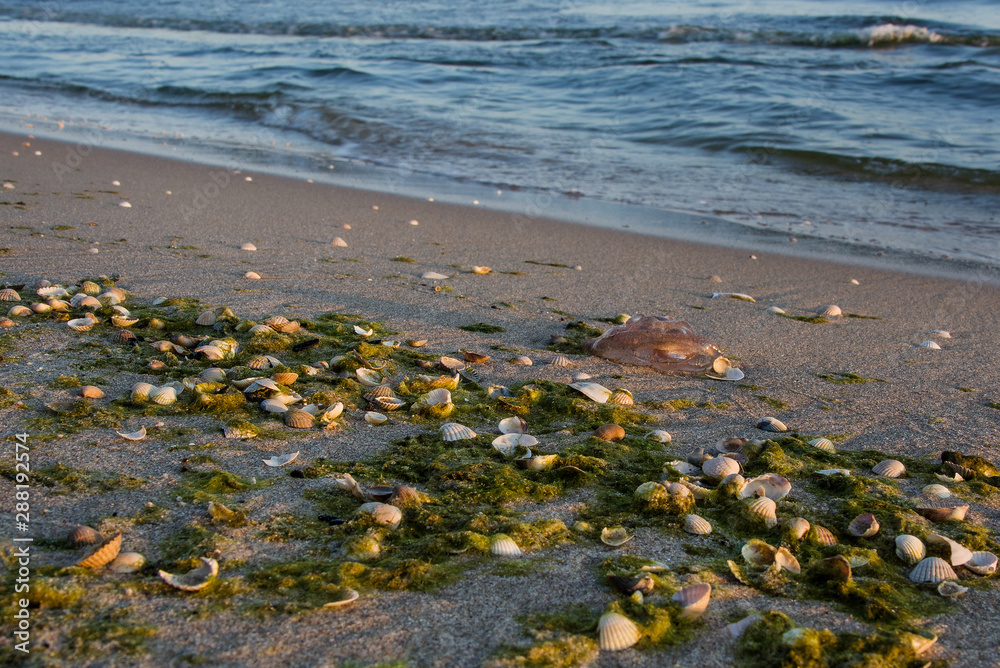 Fototapeta muszelki na plaży, piękny krajobraz nadmorski