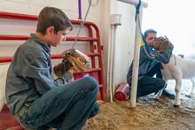 Boys And Goats At County Fair